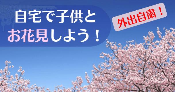【水だけで満開!】話題の「マジック桜」を育ててみた|おうち時間の癒やし